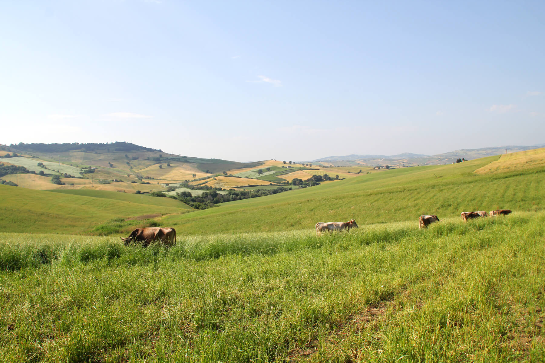 agricoltura biologica sito di incontri